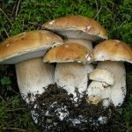 Профілактика отруєнь грибами