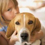 Що треба знати про токсокароз або собачі аскариди у людини