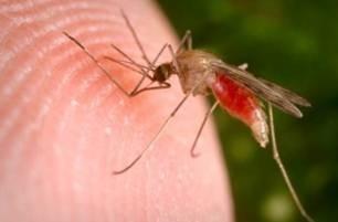 Профілактика малярії