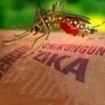 Чи небезпечний для України вірус Зіка?