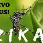 Вірус Зіка - причина нової пандемії