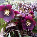 Перші квіти: краса та здоров'я