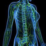 Знання лімфатичної системи – запорука профілактики і грамотного лікування патологічних процесів