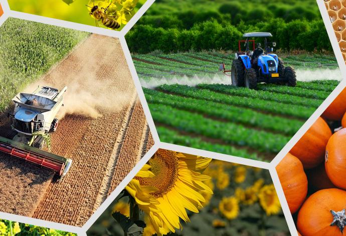 Вплив агровиробництва на екосистеми та здоров'я людей