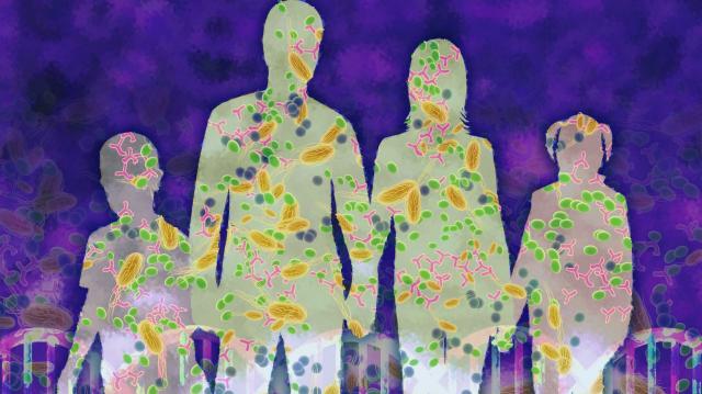 Чи виживе людина без мікробів?